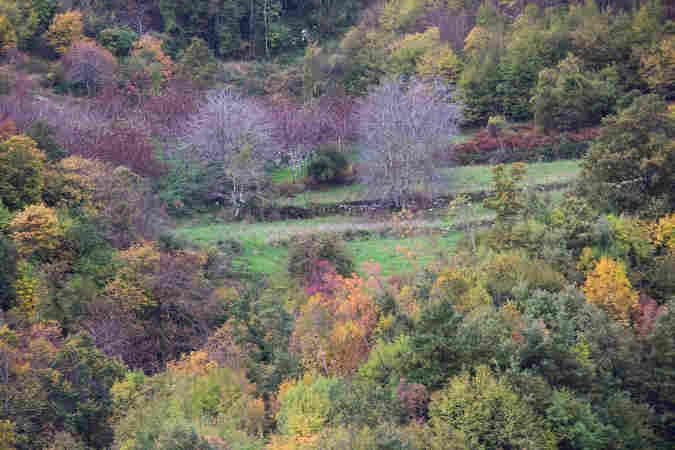 Immagini del sannio rurale 3